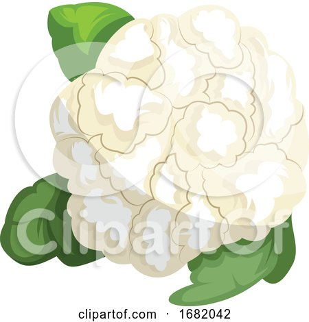 White Cauliflower with Green Leafs by Morphart Creations