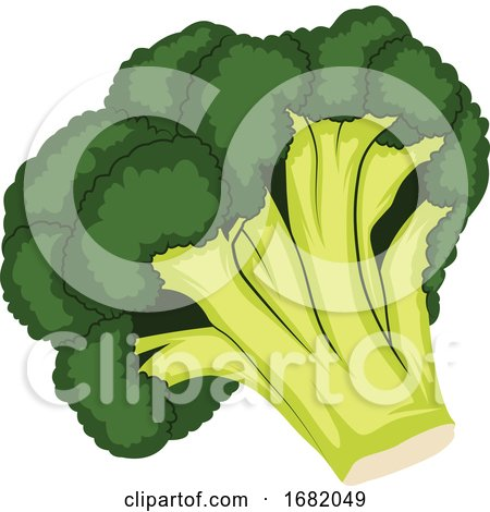 Dark Green and Light Green Cartoon of Broccoli by Morphart Creations