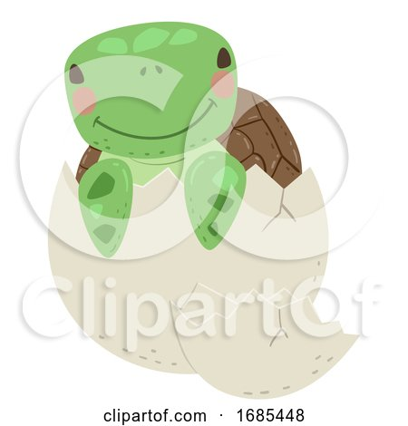Animal Hatch Egg Turtle Illustration by BNP Design Studio