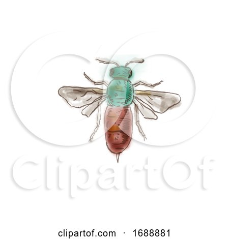 Ruby Tailed Wasp Drawing Posters, Art Prints