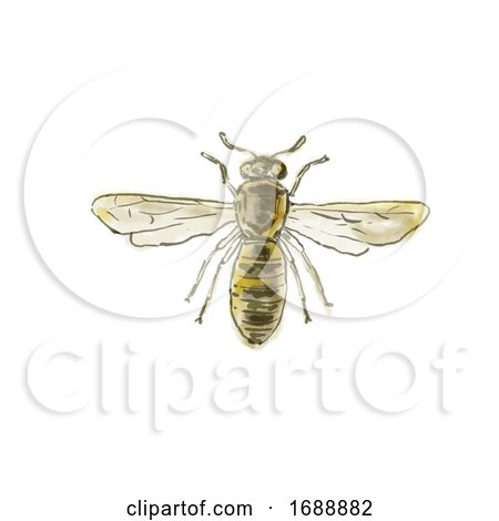 Spanish Pollen Wasp Drawing Posters, Art Prints