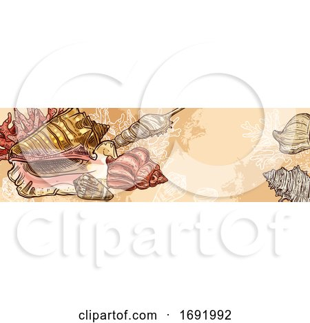Seashell Banner by Vector Tradition SM