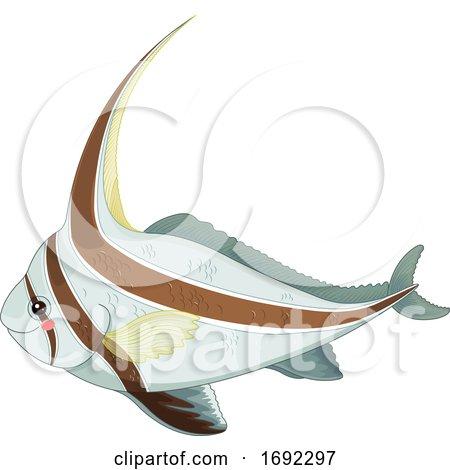 Cute Jackknife Fish by Pushkin