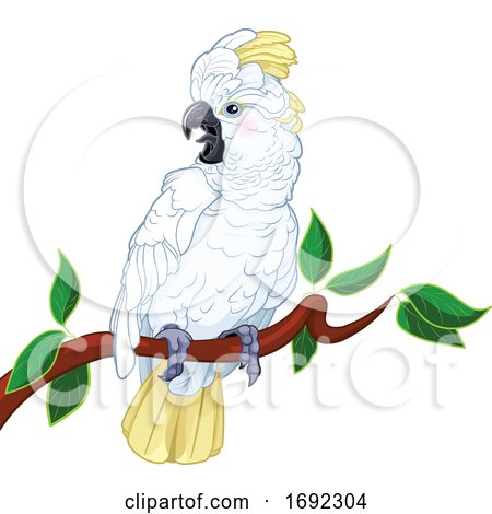 Perched White Cockatoo by Pushkin