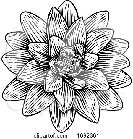 Lotus Flower Woodcut Water Lilly Engraved Etching by AtStockIllustration