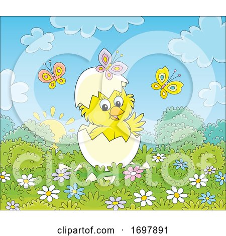 Hatching Spring Chick Posters, Art Prints
