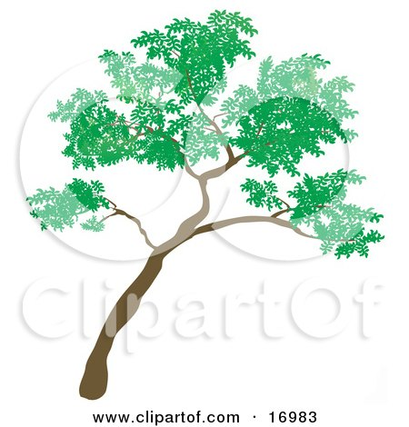Big Green Tree Leaning to the Right Clipart Illustration by Rasmussen Images