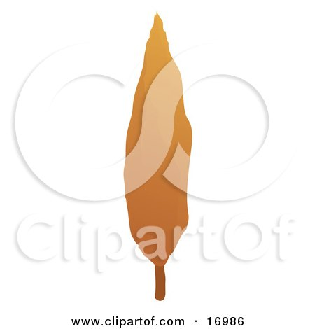 Tall Cypress Tree With Orange Autumn Foliage In The Fall Season Clipart Illustration by Rasmussen Images