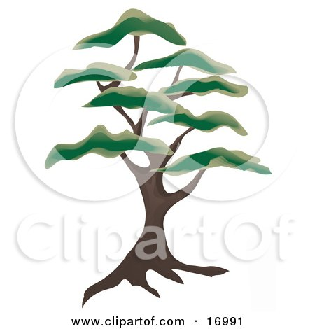 Large Juniper Tree With Green Foliage Tufts Clipart Illustration by Rasmussen Images