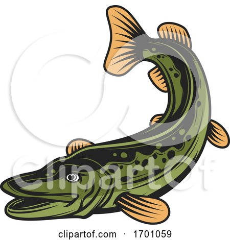 Swimming Pike Fish by Vector Tradition SM