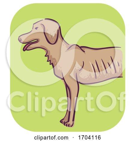 Dog Symptom Weight Loss Illustration by BNP Design Studio