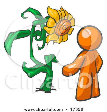 Orange Man Proudly Standing In Front Of His Giant Sunflower In His Garden  Posters, Art Prints