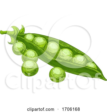 Peas Garden Green Sweet and Pod Vintage Woodcut by AtStockIllustration