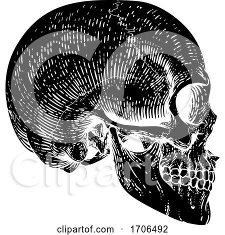 Skull Grim Reaper Vintage Woodcut Illustration by AtStockIllustration