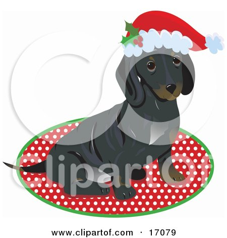 Cute Little Dachshund Puppy Dog Wearing A Santa Hat And Sitting On A Rug After Being Given As A Gift On Christmas  Posters, Art Prints