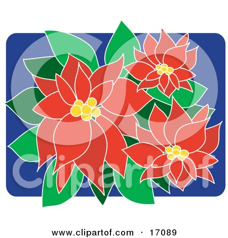 poinsettia clipart looks