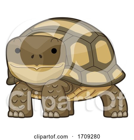 Desert Tortoise Illustration by BNP Design Studio