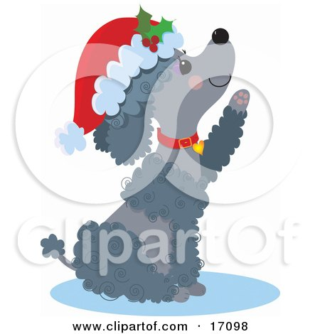 Happy Gray Poodle Puppy Dog Wearing A Santa Hat And Red Collar, Sitting And Reaching Out A Paw After Being Given As A Gift On Christmas Clipart Illustration by Maria Bell