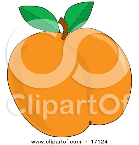 Plump And Juicy Apricot With A Stem And Two Green Leaves, Freshly Picked Off Of The Tree In The Orchard Clipart Illustration by Maria Bell