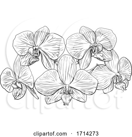 Orchid Flower Woodcut Etching by AtStockIllustration