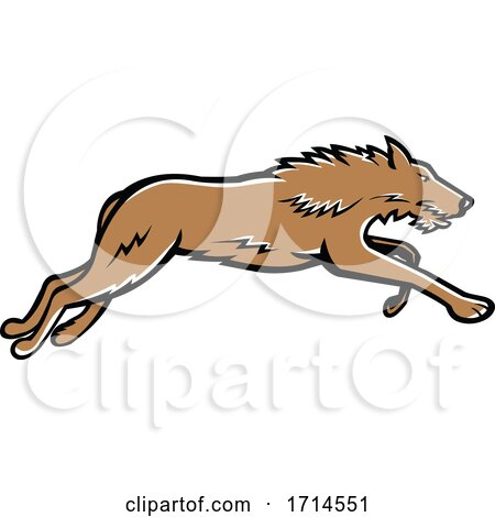 Scottish Deerhound Running by patrimonio