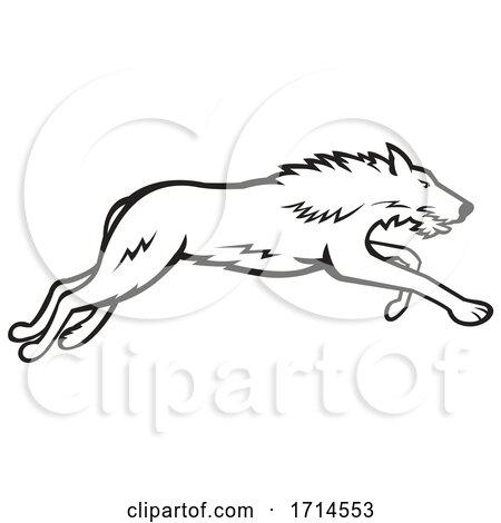 Scottish Deerhound Running Black and White by patrimonio