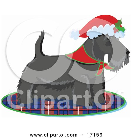 Scottie, Scottish Or Aberdeen Terrier Puppy Dog Wearing A Bandana Around His Neck And A Santa Hat On His Head, Standing On A Plaid Rug After Being Given As A Gift On Christmas Clipart Illustration by Maria Bell