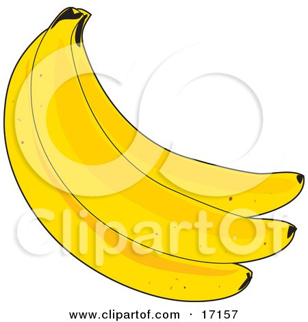 Bunch of Three Fresh Yellow Bananas Clipart Illustration by Maria Bell