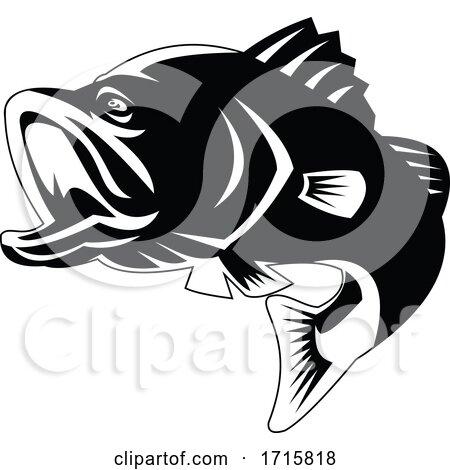 Barramundi or Largemouth Bass Fish Jumping Black and White Retro by patrimonio