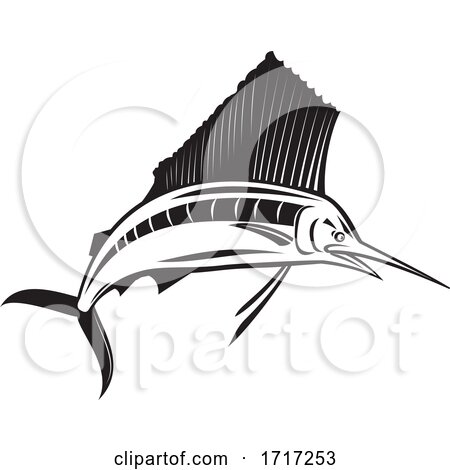 Atlantic Sailfish by patrimonio