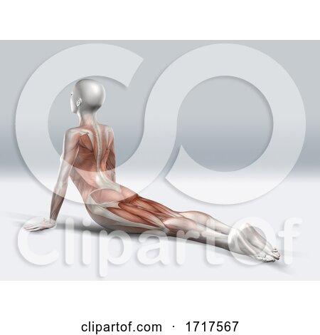 3D Female Figure in Upward Facing Dog Pose with Muscles Used Highlighted by KJ Pargeter