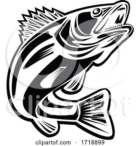 Barramundi Fish Jumping up Retro Black and White by patrimonio