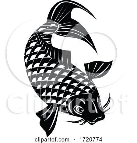 Koi Jinli or Nishikigoi Brocaded Carp a Colored Variety of the Amur Carp Swimming down Retro Woodcut Black and White by patrimonio