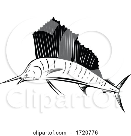 Indo Pacific Sailfish or Billfish Jumping up Side Retro Woodcut Black and White by patrimonio