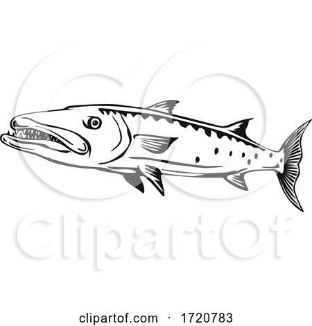 Barracuda or Sphyraena Barracuda Swimming Side View Retro Black and White by patrimonio