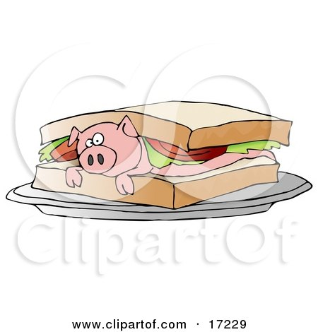 Confused Pink Pig Lying On Its Belly Under Lettuce And Tomato Between Slices Of White Bread On A Blt Sandwich Posters, Art Prints