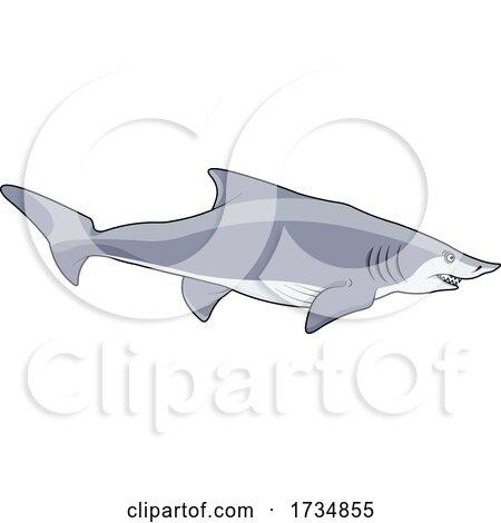 Swimming Shark by Pushkin