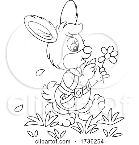 Bunny Rabbit Playing She Loves Me She Loves Me Not with Flower Petals by Alex Bannykh