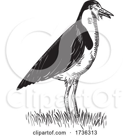 Spur Winged Plover or Masked Lapwing Standing Woodcut Black and White by patrimonio