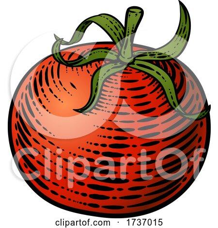 Tomato Vegetable Vintage Woodcut Illustration by AtStockIllustration