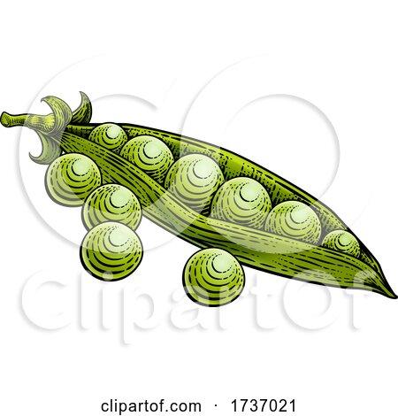 Sweet Peas Pod Vegetable Vintage Style Woodcut by AtStockIllustration
