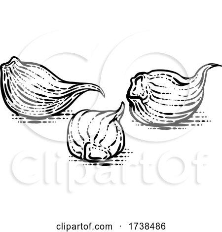 Garlic Cloves by AtStockIllustration