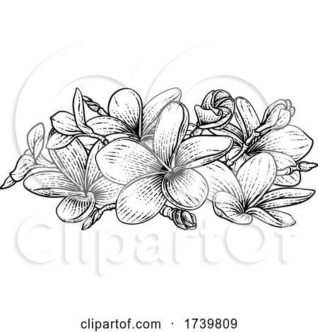 Plumeria Frangipani Tropical Bali Flower Woodcut by AtStockIllustration