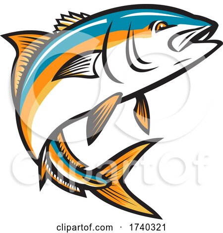 California Yellowtail Amberjack Forktail Mossback Yellowtail Tunis or Seriola Dorsalis Ray-Finned Fish Jumping up Retro Style by patrimonio