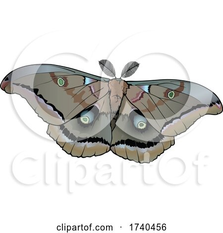 Antheraea Polyphemus Moth by dero