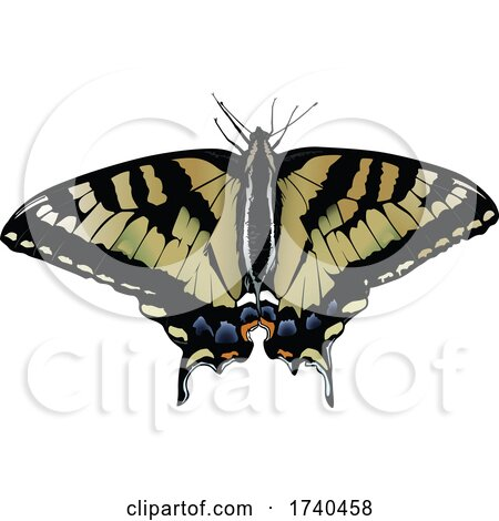Eastern Tiger Swallowtail Butterfly by dero