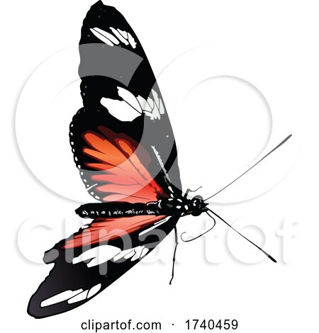 Heliconius Melpomene Butterfly by dero
