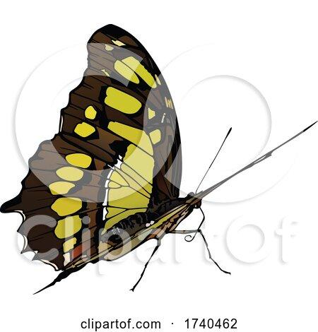 Malachite Butterfly by dero