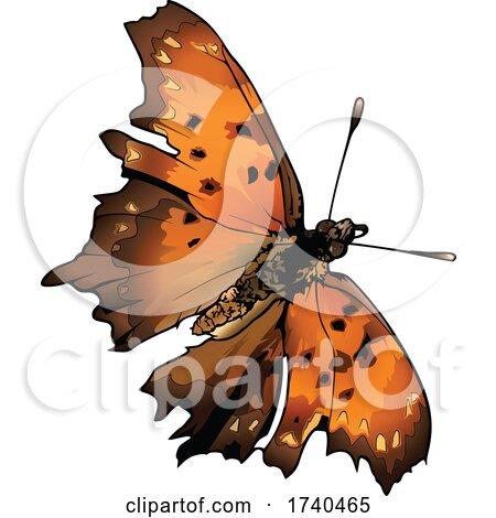 Polygonia Interrogationis Butterfly by dero