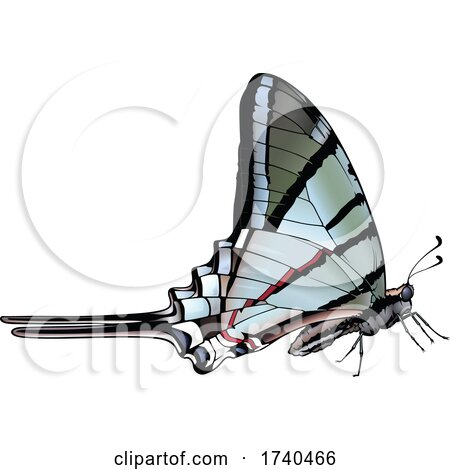 Protographium Marcellus Butterfly by dero
